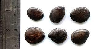 Zingana Seeds