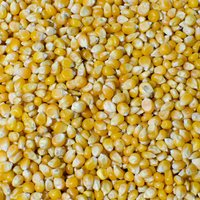 Animal Feed Yellow Corn Maize