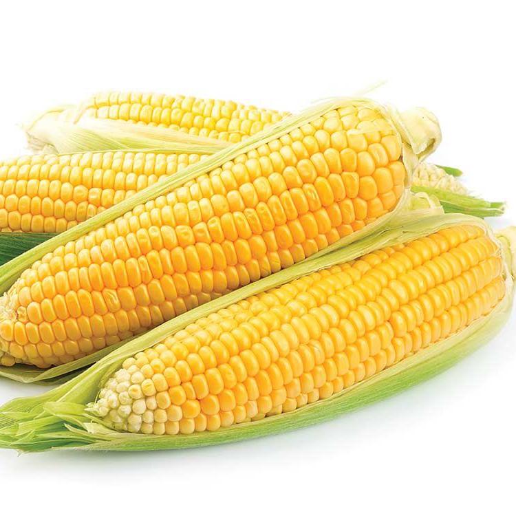 Grade 1 Non Gmo White And Yellow Corn/maize