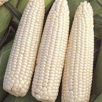 Whole Sale Bulk White Corn For Sale
