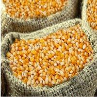 2020 Crop Large White Kidney Bean