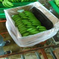 2020 Export Quality Cavendish Banana