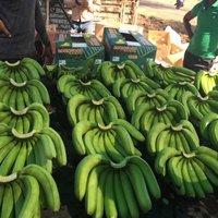 Grade A Fresh Cavendish Bananas