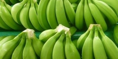 Quality Green Cavendish Banana Best Quality