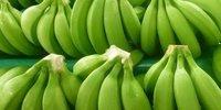 Premium Grade A Cavendish Banana