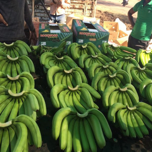 Fresh Green Cavendish Bananas