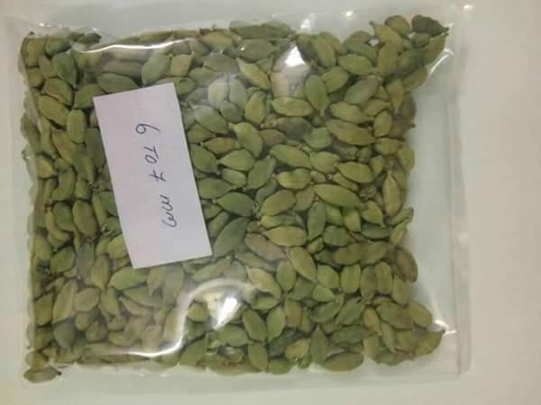 100% Fresh Large Size Green Cardamom Elachi Spice