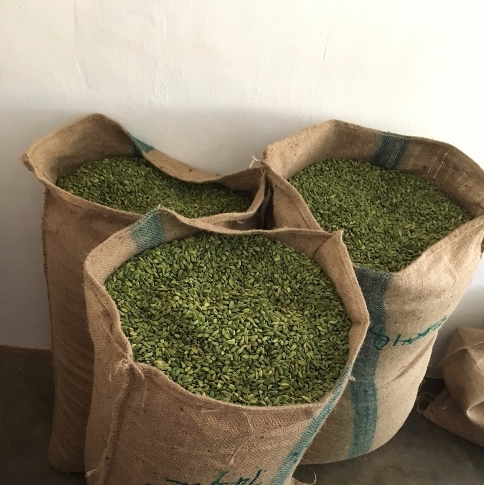 Best Grade 8mm Green Cardamom For Sale