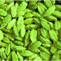 Green Cardamom 8mm Bold For Sale
