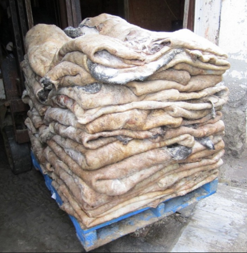 Salted Cow Head Skin /Available Wet Salted Donkey Hides/ Cow Hides/Sheep