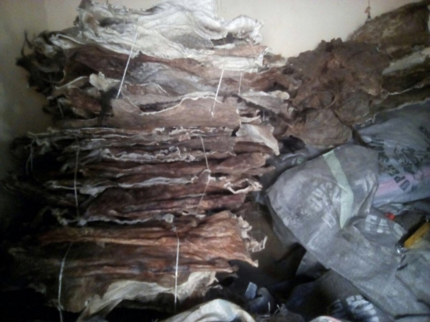 Quality Wet/dry Blue Salted Cow Skin,wet/dry Salted Donkey Hides
