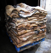 Bulk Salted Cow Head Skin /available Wet Salted Donkey Hides