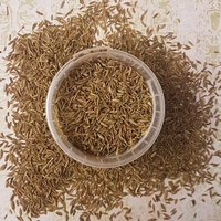 High Quality Nature Cumin Seeds Wholesale