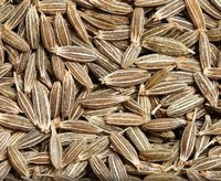 Spices Natural Dried Cumin Seeds