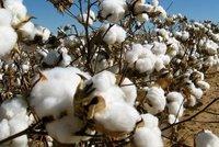 Top 100% Natural Raw Cotton