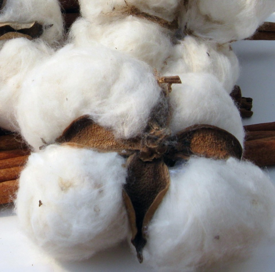 Top 100% Natural Raw Cotton