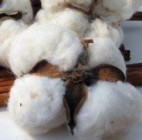Raw Cotton & Gin Motes