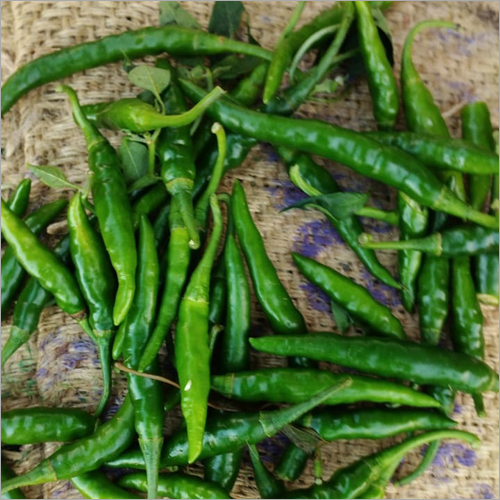 Fresh Green Chilly