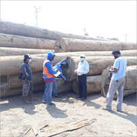 Timber Inspection