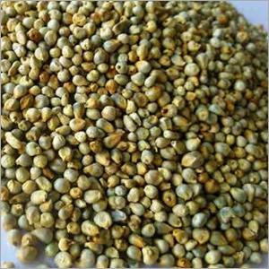 Green Millet Seeds
