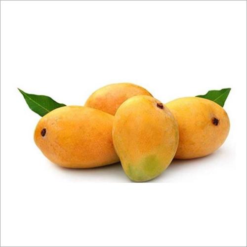 Alphanso Mango