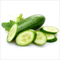Green Fresh Cucumber