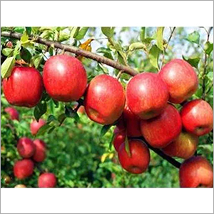 Apple Crop Growth Regulator