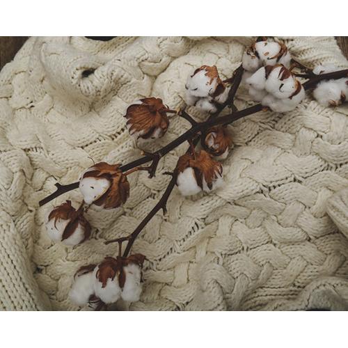 Organic Cotton Sweaters