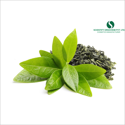 Green Tea Hair Shampoo