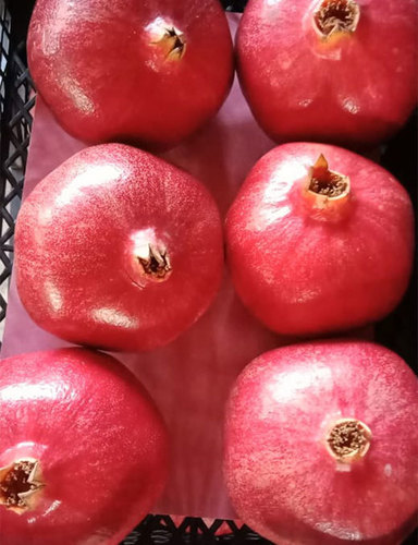 Pomegranates Fresh Fruits