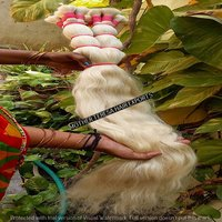 Beautiful Blond Human Hair