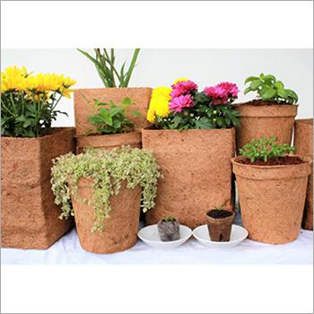 Coirs Pots