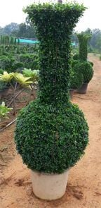 Beautiful Vessel Topiary with Pot