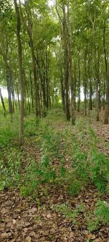 Red Sandalwood Logs