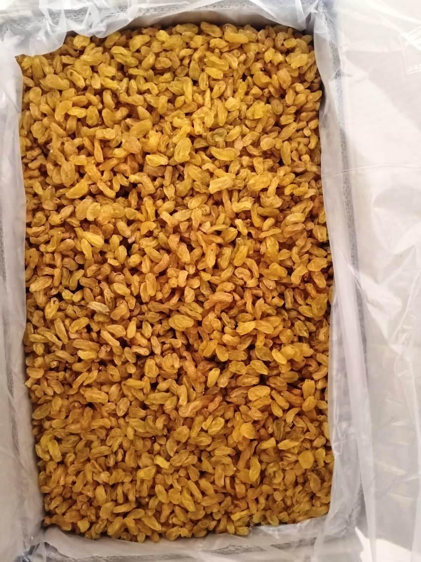 Yellow Golden Raisins