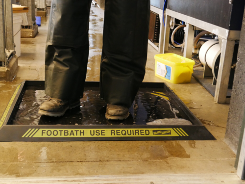 Corona Prevention Entrance Foot Sanitizing Floor Mats