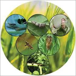 Shield Bio Pesticide