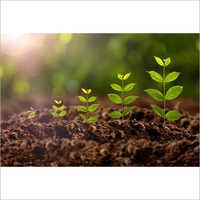 Agriculture Plant Growth Regulators