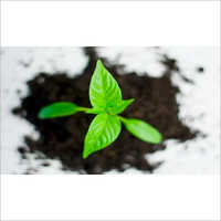 Plant Biostimulants