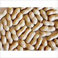 Fresh Groundnut