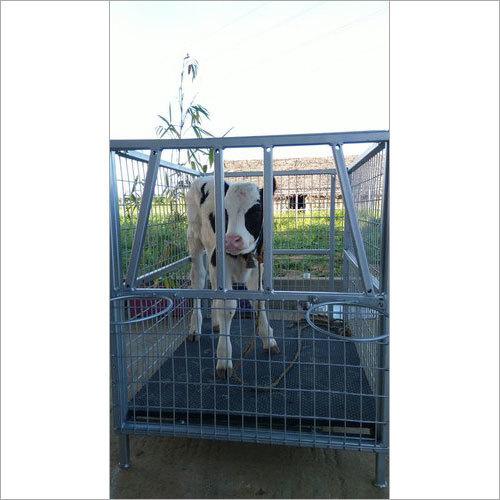 Calf Cages