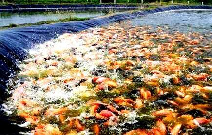 Hdpe Fisheries / Aquaculture Polythene Sheets
