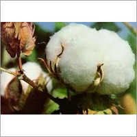 Cotton Fibre Testing Services