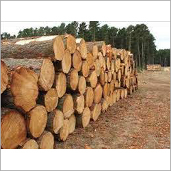 Steam Beech Wood Logs