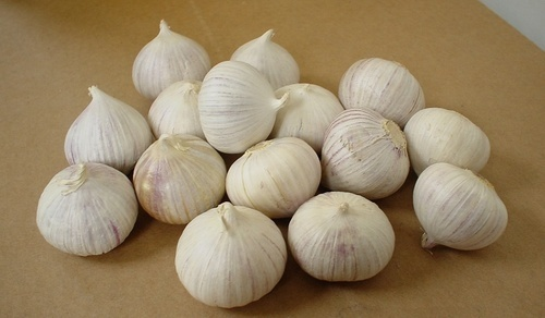 Single Clove Solo Garlic