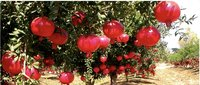 100% Water Soluble Agricultural Fertilizers-map