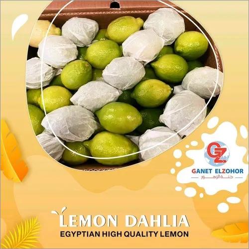 Lemon Dahlia