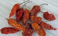 Oven Dried Bhut Jolokia Chilli Pepper Pods