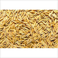 Medium Grain Rice Paddy