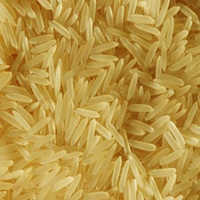 PR 11, 14 Golden Rice